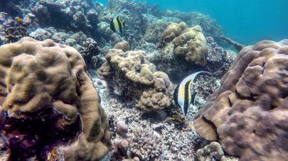 Surin-Islands-reef